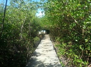 even the walkway to the beach is romantic...